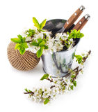 Blooming branch plum in bucket with garden tool Royalty Free Stock Photography