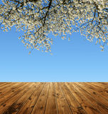 Blooming branch tree Royalty Free Stock Photography