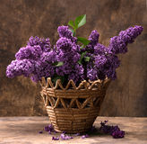 Blooming branches of lilac Royalty Free Stock Photo