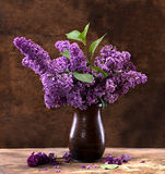 Blooming branches of lilac Royalty Free Stock Photos