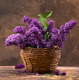 Blooming branches of lilac Stock Images