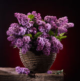 Blooming branches of lilac Royalty Free Stock Images