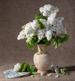 Blooming branches of lilac in vase and dollars Stock Photo