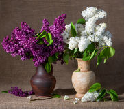 Blooming branches of lilac in vases Stock Photo