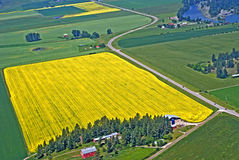 Blooming bright yellow rapeseed farm field in western Montana, U. Aeria view of bright yellow rapeseed crop located in the Flathead Valley of western Montana Stock Photography