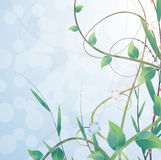 Blooming bush Stock Image