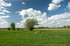 Blooming bush on a green meadow and white clouds on blue sky. Spring view stock image