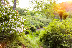 Blooming bush. Inside of beautiful natural outdoor park Royalty Free Stock Photo