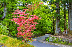 Blooming bush at Nikko heritage site Royalty Free Stock Photography