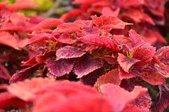 Blooming Bush Royalty Free Stock Photos