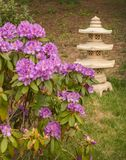 Garden in Japanese stylization with rhododendron and oriental la Royalty Free Stock Photo