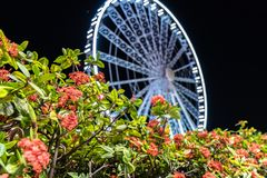 Blooming bushes near Ferris wheel at night royalty free stock photography
