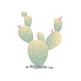 Blooming Cactus. Isolated on white background Royalty Free Stock Photography