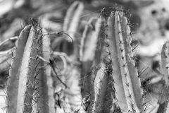 Blooming cactus with cobwebs by the sandy beach. In Brazil Royalty Free Stock Photography
