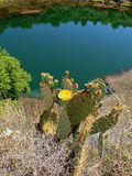 Blooming Cactus at Montezuma's Well Royalty Free Stock Images
