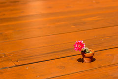 Blooming Cactus. Pink flower on tiny cactus on redwood deck Stock Images