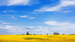 Blooming canola field and beautiful sky Royalty Free Stock Images