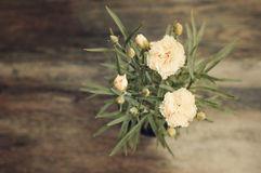 Blooming carnation in pot on wooden background Stock Photos