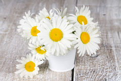 Blooming chamomile flowers in a bucket Stock Photo