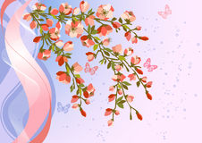 Blooming Cherry Blossom Branches Stock Images
