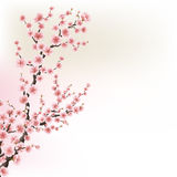 Blooming Cherry Blossom Branches card. EPS 10 Stock Photos