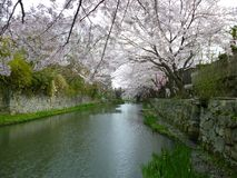 Sakura At Japanese Moat, Omihachiman City Moat stock photos