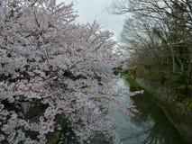Sakura, Omihachiman City Moat, Shiga Japan Stock Photography