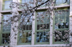 Blooming cherry branches frame campus doors and windows - 3 Stock Images