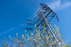 Blooming cherry and high-voltage line on sunny day Royalty Free Stock Photos