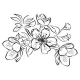 Blooming cherry. Sakura branch with flower buds. Black and white drawing of a blossoming tree in spring. Logo with. Japanese cherry blossoms. Tattoo stock illustration