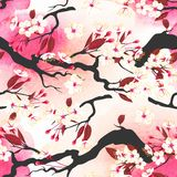 Blooming cherry seamless Stock Image