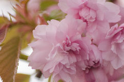Blooming Stock Photos