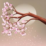 Blooming cherry tree branch Royalty Free Stock Image