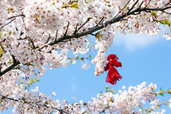 Blooming cherry tree in spring. With pair of handmade thread toys hanging on the branch Royalty Free Stock Image