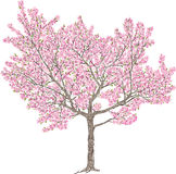 Blooming cherry tree Stock Images