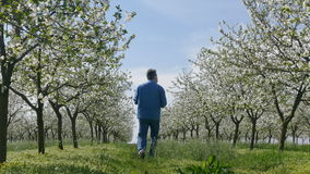 Blooming cherry trees in spring and farmer stock video footage