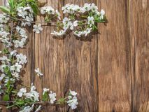 Blooming cherry twig over old wood. Royalty Free Stock Images
