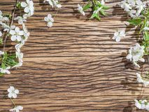 Blooming cherry twig over old wood. Stock Image