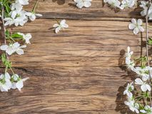 Blooming cherry twig over old wood. Royalty Free Stock Photography