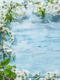 Blooming cherry twig over wood. Royalty Free Stock Image
