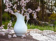Blooming chery sprigs in the white jug on blurry natural background royalty free stock image