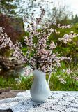 Blooming chery sprigs in the white vaze on blurry natural background with garden lantern royalty free stock photography