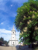 Blooming chestnut tree near the Reformed Church in Tyachiv, Ukra Stock Photography