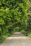 Blooming chestnut trees along the gravel road. Early spring, Royalty Free Stock Photography
