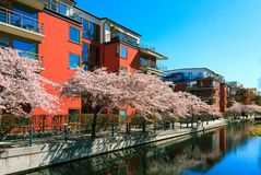 Blooming city street in spring. royalty free stock photography