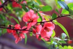 Blooming closeup of tree Stock Photos