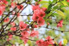 Blooming closeup of tree Stock Image