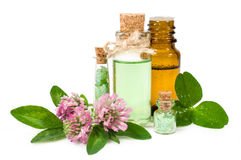 Blooming clover and aromatic oils Stock Photo