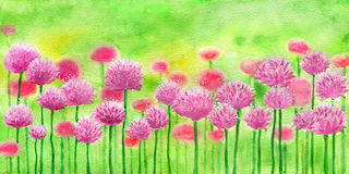 Blooming clover. Flowers on the field with copy space, watercolor illustration Stock Photo