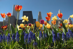 Chicago in bloom Royalty Free Stock Photos